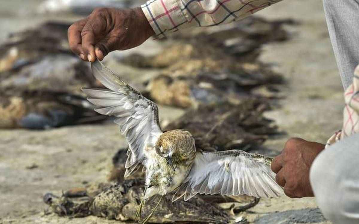 Rajasthan High Court took suo moto cognizance of the death of migratory birds around the Sambhar lake.