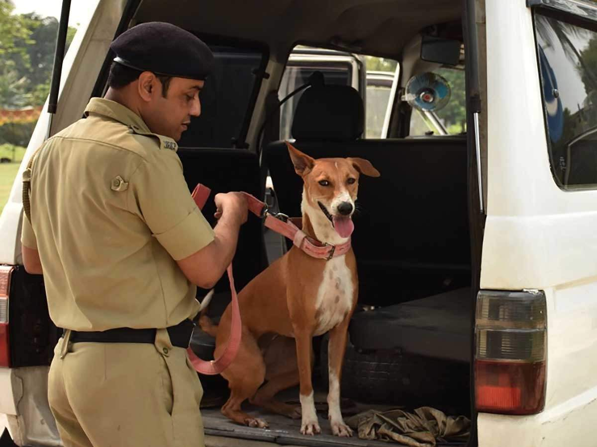 Bombay HC directs Police not to stop or obstruct ambulances or pet taxies for ferrying sick animals to and fro veterinary clinics.