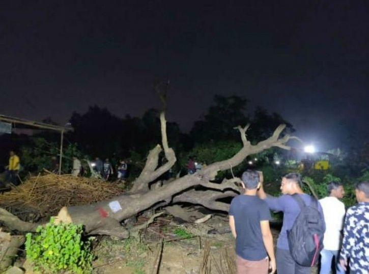 Aarey Forest Controversy